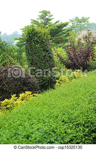 anglaise, garden. - csp15325130