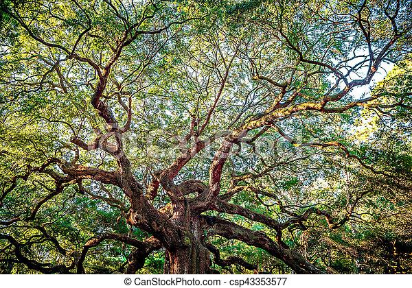 Angle Oak Tree in Johns Island of South Carolina - csp43353577