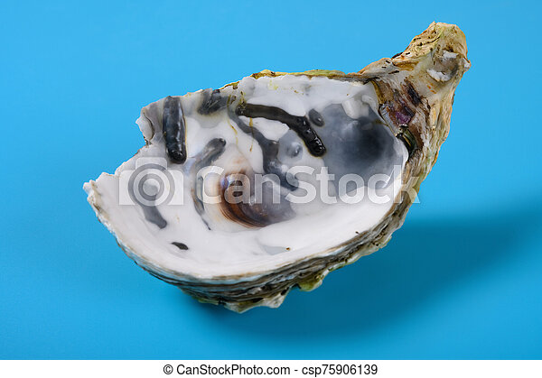 angle view oyster shell on blue background close up - csp75906139