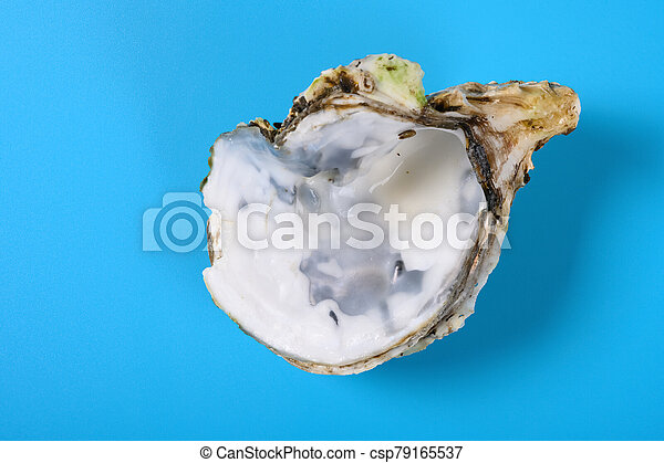 angle view oyster shell on blue background - csp79165537