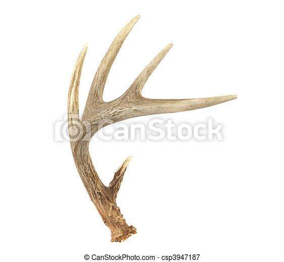 Angled Whitetail Deer Antler - csp3947187