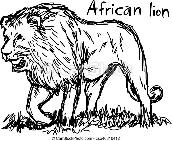 angry african lion walking - vector illustration sketch hand drawn with black lines, isolated on white background - csp46818412