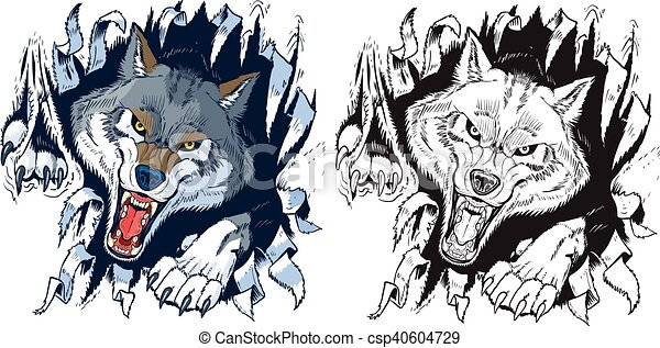 Angry Wolf Ripping out Background - csp40604729