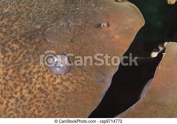 Armario de una anguila gigante - csp9714772
