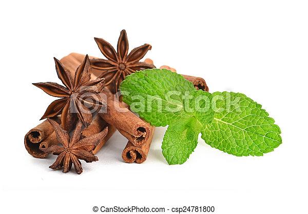 anice and cinnamon - csp24781800