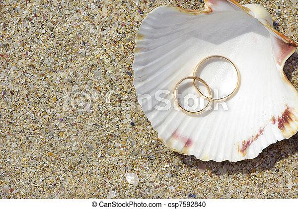 Dos anillos en la concha de mar - csp7592840