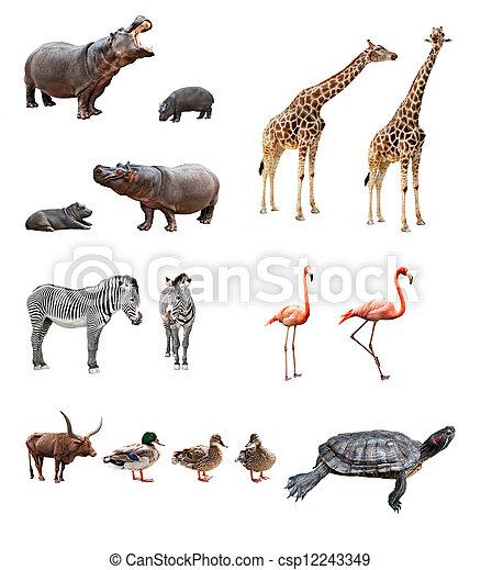 animais, jardim zoológico - csp12243349