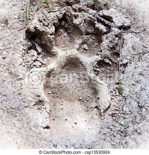 Animal footprint - csp13530924