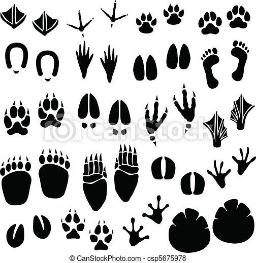 Animal Footprint Track Vector - csp5675978