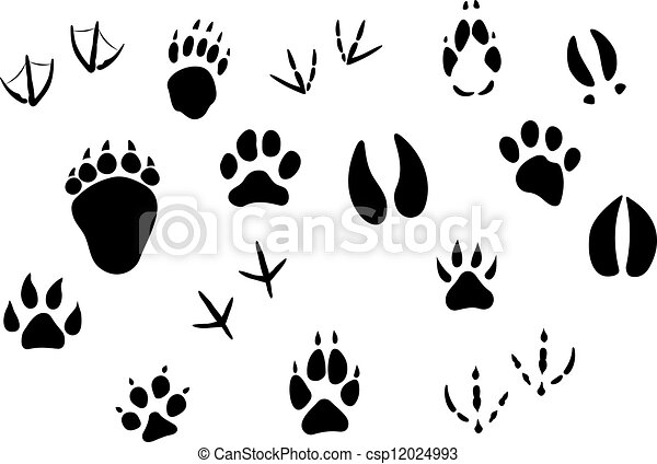 Animal Footprints And Tracks Isolated On White For Wildlife Concept