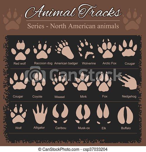 Animal Footprints - North American animals - csp37033204