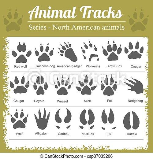 Animal Footprints - North American animals - csp37033206