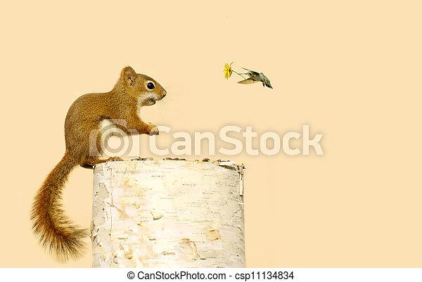 Animal friends. - csp11134834