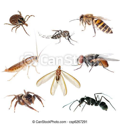 Insectos almacen de fotos e imágenes. 326.548 Insectos retratos y ...