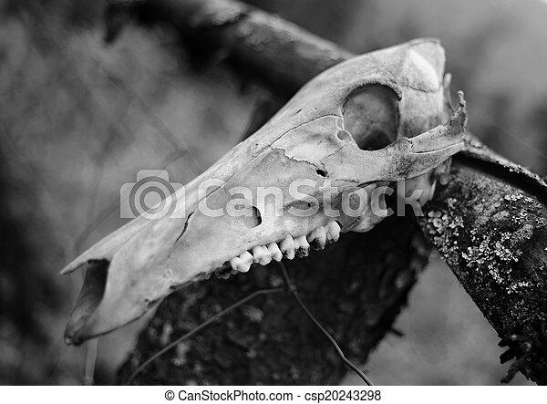 Animal skull black white csp20243298