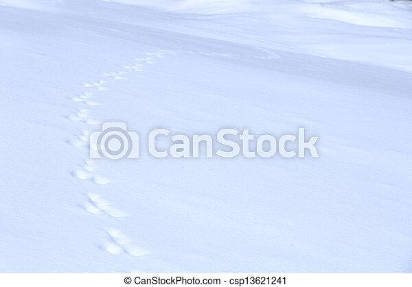 animal traces on snow - csp13621241