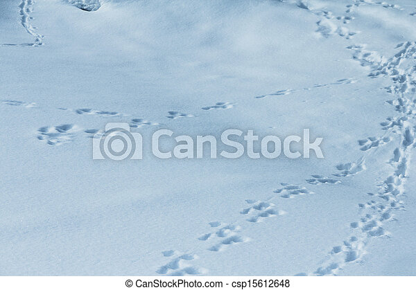 animal traces on snow - csp15612648