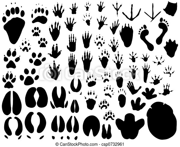 animal tracks collection of outlines of animal foot prints clipart rh canstockphoto com Printable Animal Paw Prints animal tracks clipart free