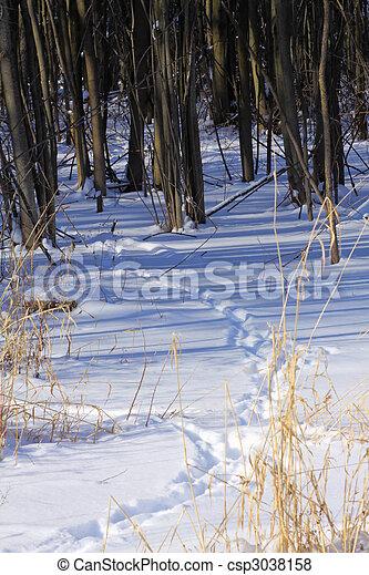 Animal tracks in snow - csp3038158