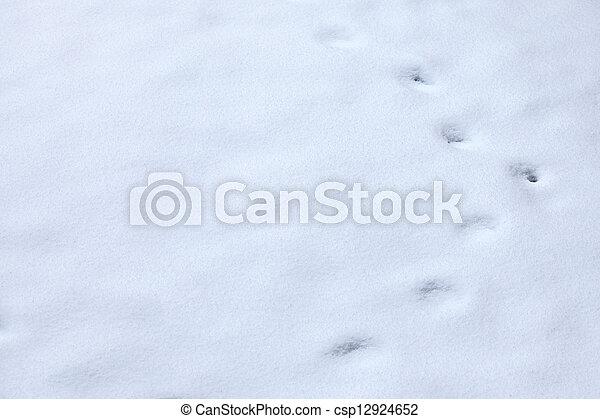 Animal tracks in snow - csp12924652