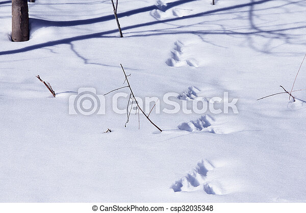 Animal tracks in snow - csp32035348