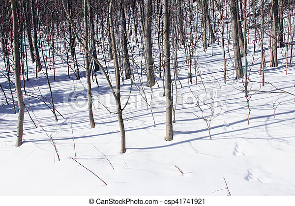 Animal tracks in snow - csp41741921