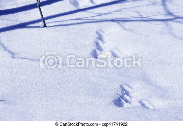Animal tracks in snow - csp41741922