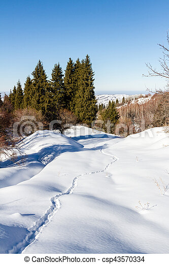 Animal tracks in the snow in the mountains - csp43570334
