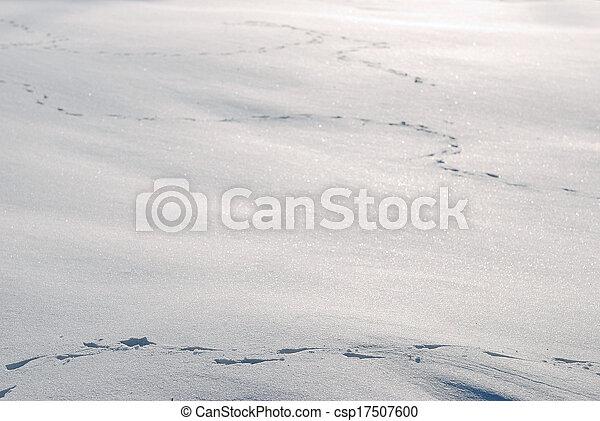 Animal tracks in the snow - csp17507600