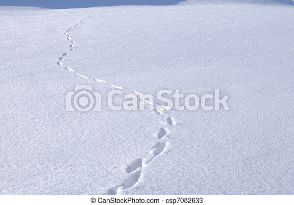 Animal Tracks in the Snow - csp7082633