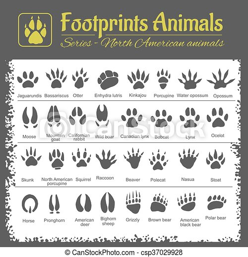 Animal Tracks - North American animals - csp37029928