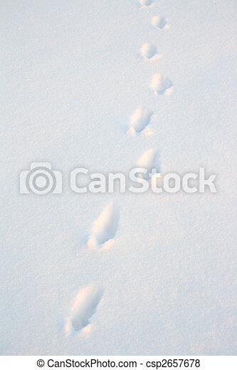 animal tracks on snow - csp2657678