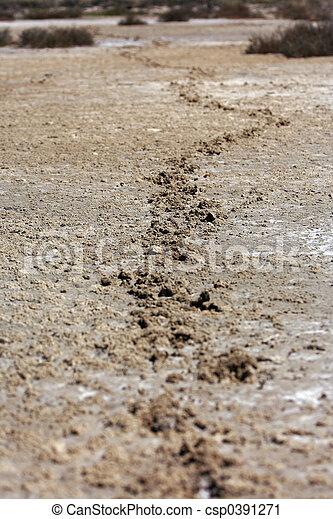 animal tracks - csp0391271