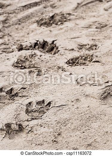 Animal tracks - csp11163072