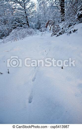 Animal tracks - csp5413987