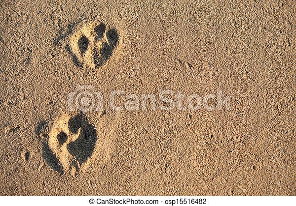 Animal tracks - csp15516482