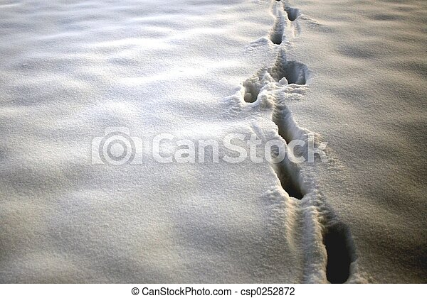 Animal Tracks - csp0252872