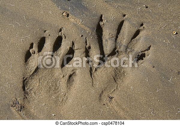 animal tracks - csp0478104