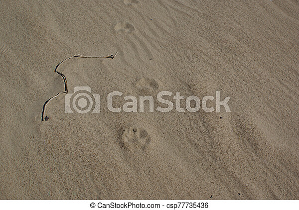 animal tracks - csp77735436