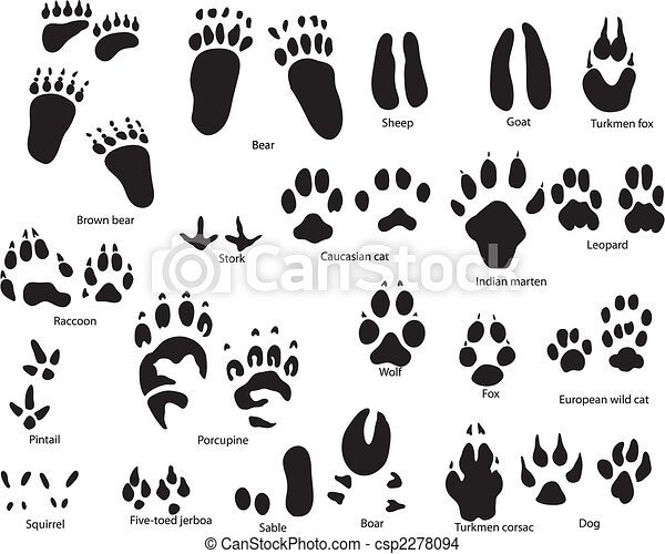 animal trails with title - csp2278094