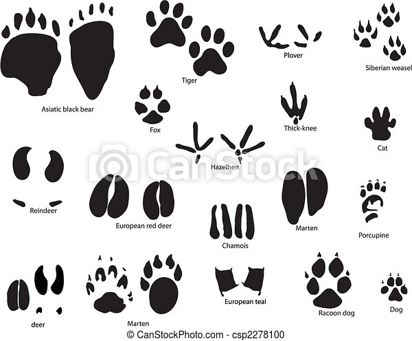 animal trails with title - csp2278100