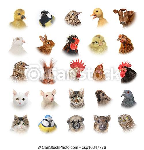 animales, aves - csp16847776