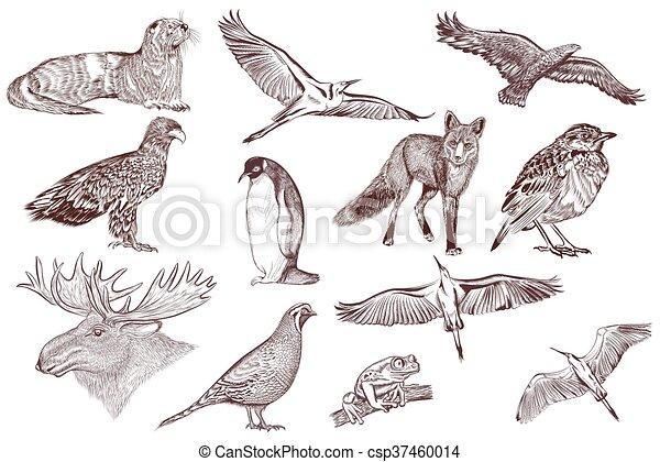 Animales, colección, filigrana, dibujado, grabado, style.eps ...