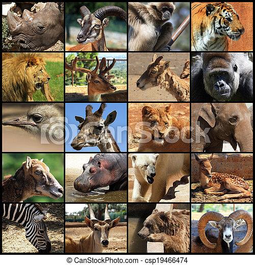 Collage de animales - csp19466474