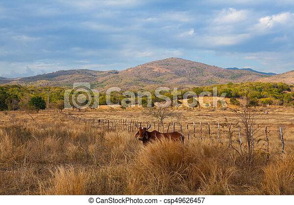 animales, cuba, granja, campo, pasto, trinidad - csp49626457