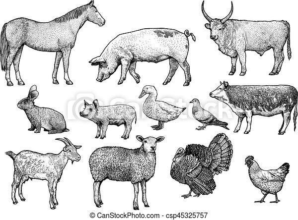 Resultado de imagen de GRABADOS ANIMALES