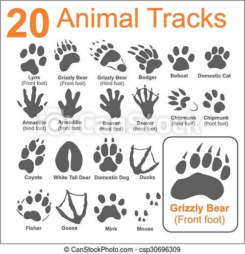 Los animales rastrean, vector fijado - csp30696309