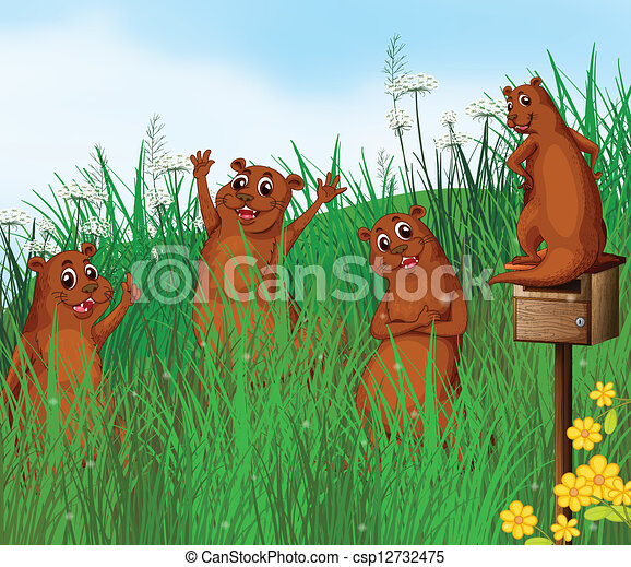 Animales salvajes - csp12732475