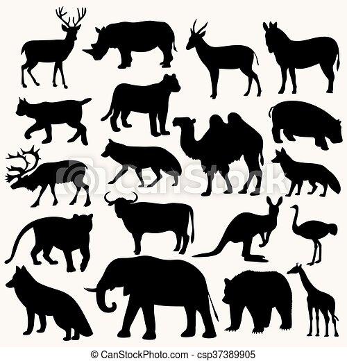 Animales salvajes - csp37389905