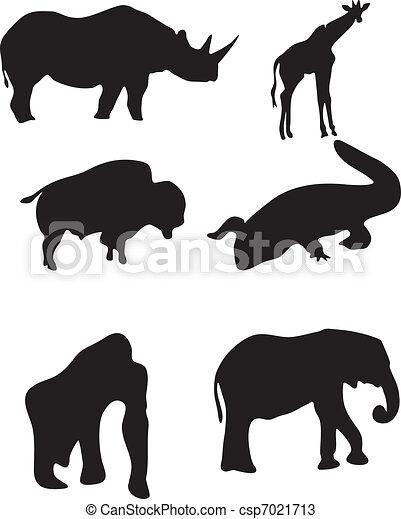 Animales salvajes - csp7021713